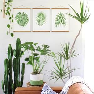 Indoor Essentials